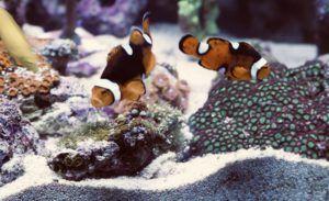 Aquarium test