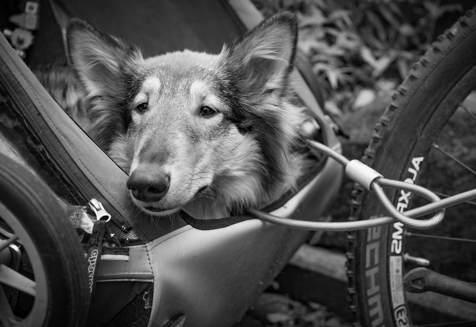 Fahrradanhänger Tiertransporter