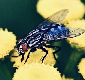Fliegenfalle Test