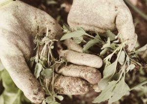 Gartenfräse Test