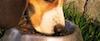 hundefutter test vergleich