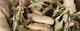 gartenfräse test vergleich