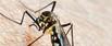 moskitonetz test vergleich