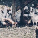 Hühnerhaus test