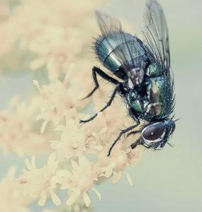 Fliegenklatsche test