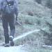 Spazieren macht glücklich: Wissenschaftler fordern mehr Bewegung