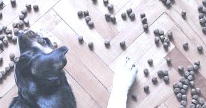 Pedigree Vital Hundefutter rueckruf