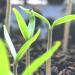 Perfekter Start in die Gartensaison 2021: Diese Must-Haves erweitern den Frühlingsanfang